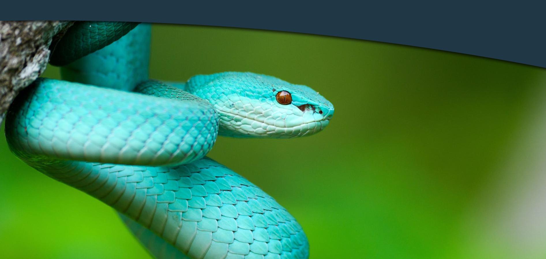 snakeimage-vetstream-vetlexicon-vetacademy-webpartner